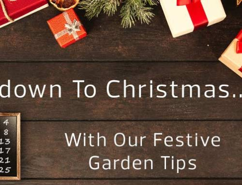 Advent Calendar of Festive Gardening Tips